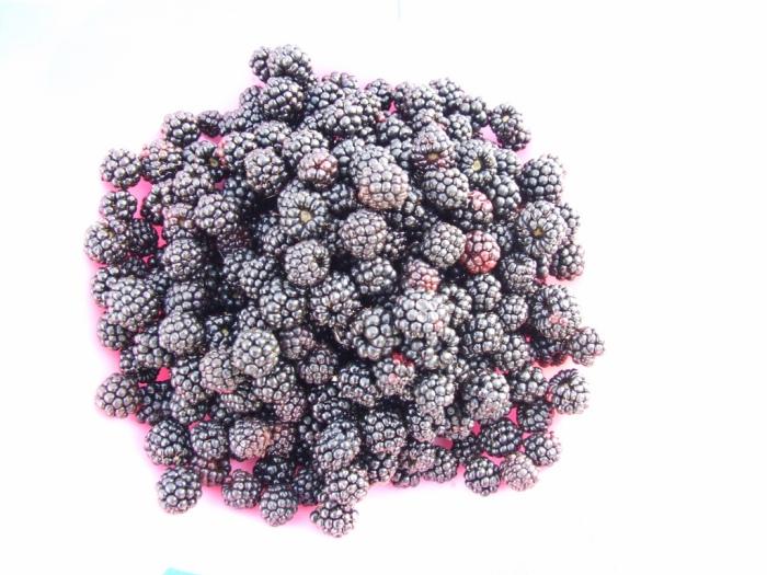 Brigit Varenkamp Blackberries